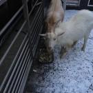 Záchrana túlavých zvierat